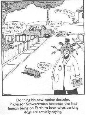 Far Side Translation